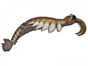 Anomalocaris is the largest known predator of Cambrian seas and hunted smaller arthropods of that time.